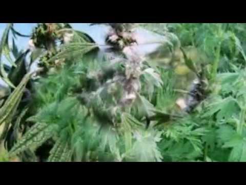 Полезные свойства трав Здоровье на wwwelleru