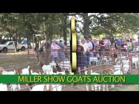 Miller Show Goats Auction, Dublin TX