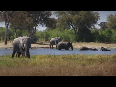 Botswana by 4x4 Safari