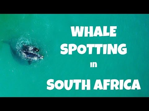 Whale Spotting in South Africa with Yuneec Typhoon H with Intel RealSense