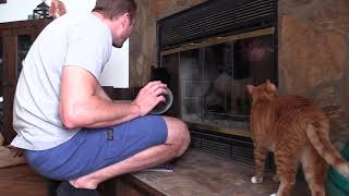 Cats Protect Their Home from Intruders