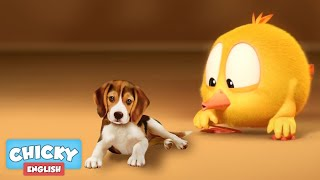 Where's Chicky? Funny Chicky 2020 | DOG SITTER | Chicky Cartoon in English for Kids