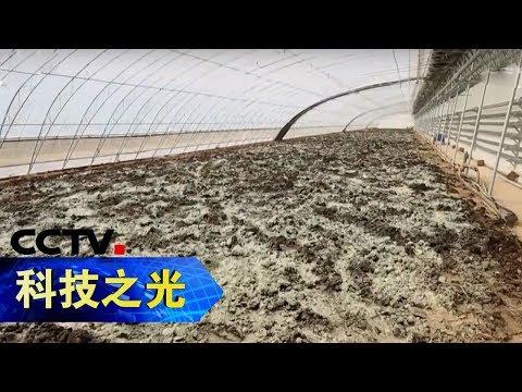 《科技之光·创新一线》 粪渣变金山:变废为宝 如何将禽畜废弃物再利用 20181216CCTV科教
