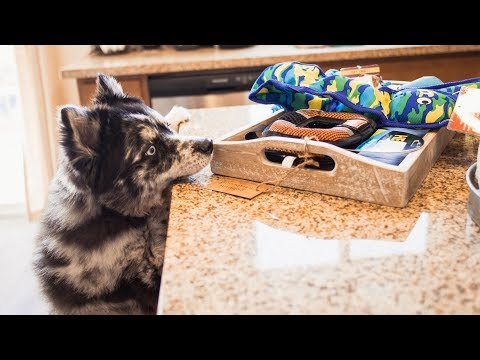tough-dog-toys-comparison---are-they-really-tough?