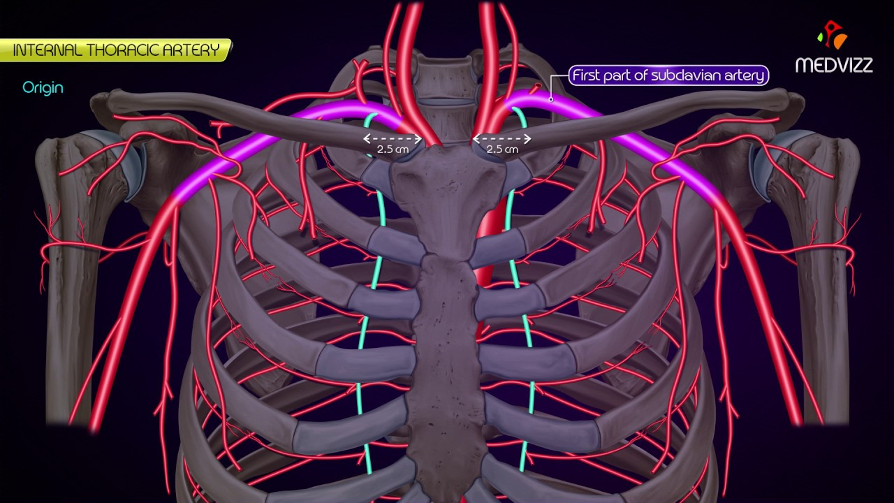 Internal Thoracic Artery Anatomy Medvizz Animated Lectures Youtube
