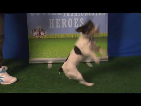 Super star dog Sweetie plays dead, dances, talks and counts - so amazing!