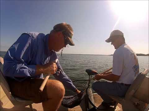 Video Santee catfish guides