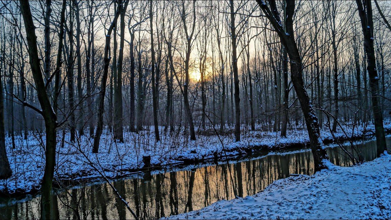 Winter im auenwald leipzig januar 2016 natur und wald for Auenwald leipzig