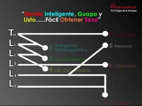 APRENDER EL PLEXO LUMBAR EN 3 MINUTOS - YouTube