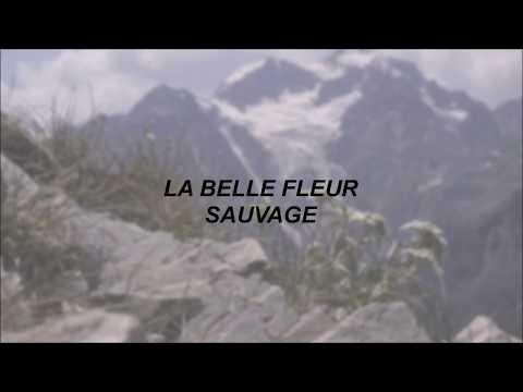 Lord Huron // La Belle Fleur Sauvage - Lyrics
