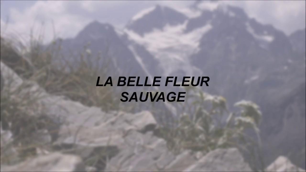 Lord Huron La Belle Fleur Sauvage Lyrics Youtube