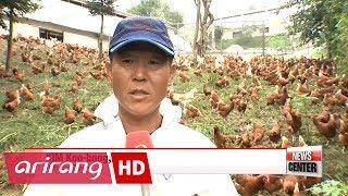 Adopting free-range farming for pesticide-free eggs