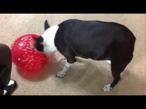 Dogs Vs. Balloons
