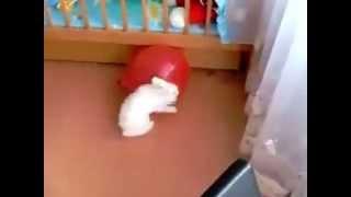 У кролика бомбануло больше , чем у шарика