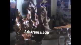 Sekarnusa.com Teak Root Furniture Bali Indonesia