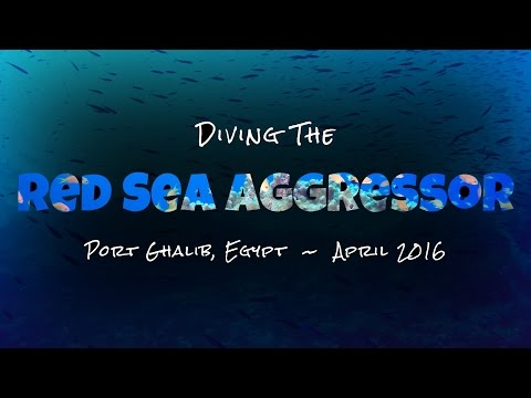 Diving the Red Sea Aggressor 2016