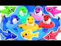 Do Re Mi Dolphins sing a song with Baby Shark, Coco Miguel~! #PinkyPopTOY