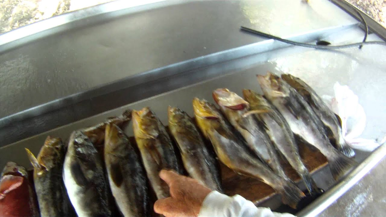 Dana point fishing 8 4 part 3 youtube for Dana point fish report
