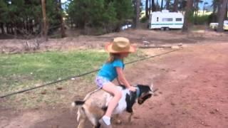 goat riding girl