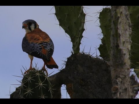 COLOMBIA - TATACOA DESERT (PART 3) - WILDLIFE (Full HD)
