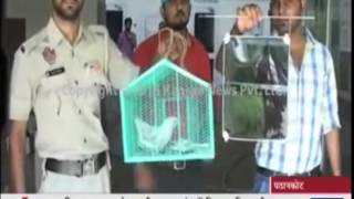 Spy pigeon jailed in India  Bird accused of working for Pakistani intelligence is placed
