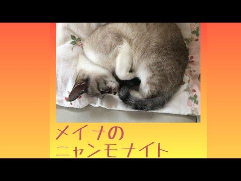 メイナのニャンモナイト【2019.6.18】