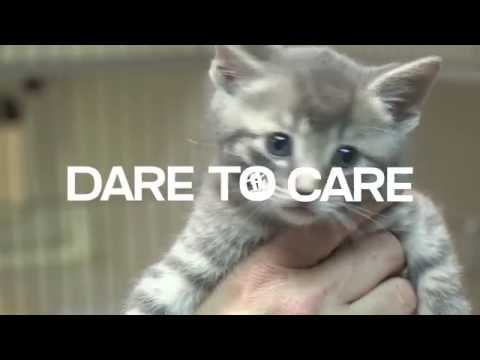 Dare To Care! Connecticut Humane Society