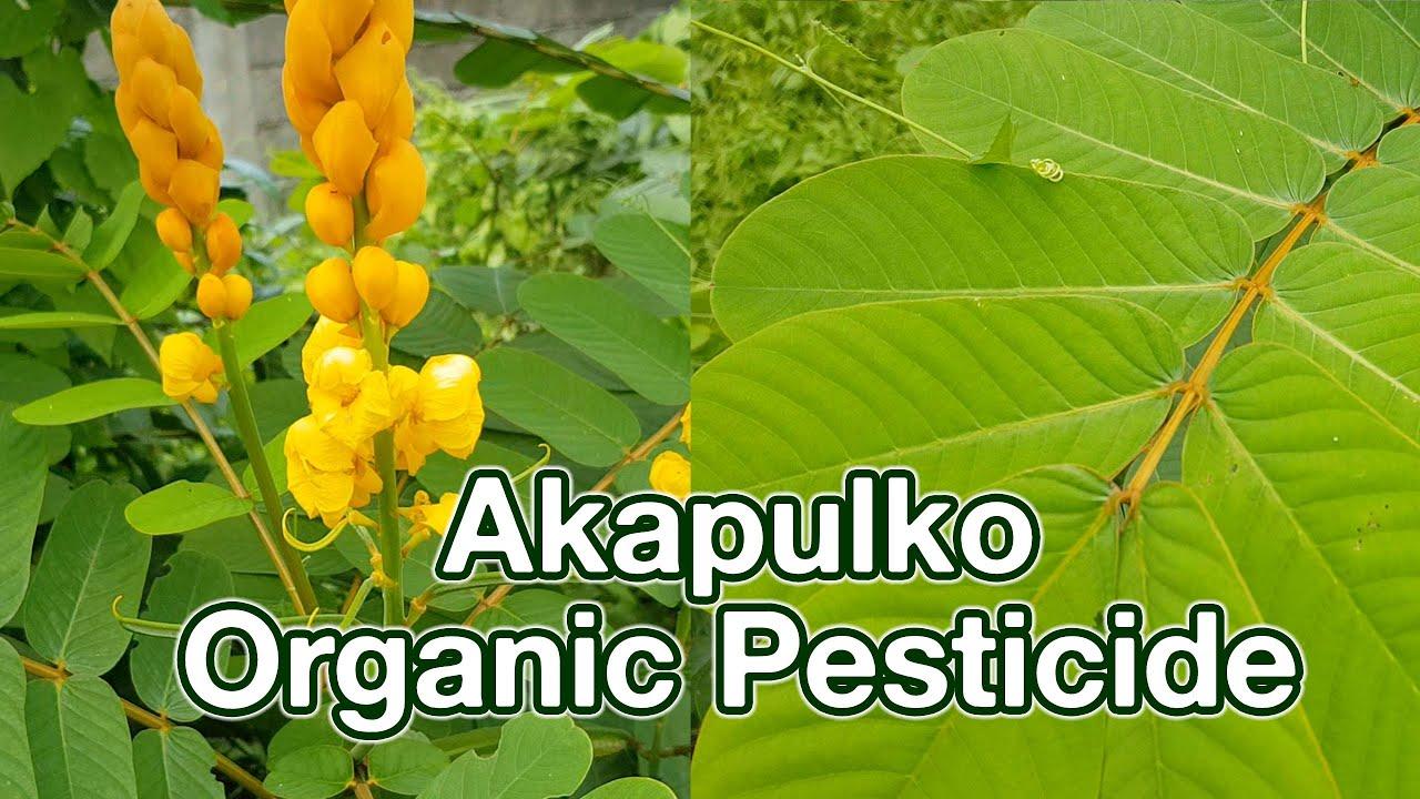 ierbivore insecticide