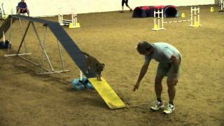Kiwi At The Weimaraner Agility Open Standard Course On 7/24/11 Hidef