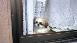 外を覗き見しながら、しゃっくりしてるよ!!