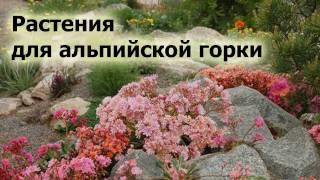 Растения для альпийской горки. Названия, фото, краткое описание