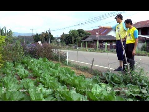 """""""หน้าบ้านน่ามอง"""" พืชผักสวนครัวรั้วกินได้ จ.พะเยา - Springnews"""