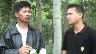 Download Video BUDIDAYA SENGON 1 - TIPS MENINGKATKAN MUTU & PERTUMBUHAN DENGAN PUPUK SUPERNASA MP3 3GP MP4