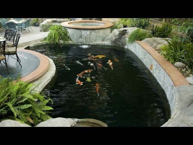 Pond building 101 (20 questions to ask yourself before building a koi pond.