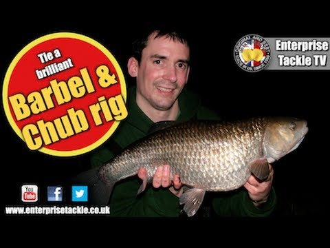 How to tie the best big barbel and chub rig - it's devastating!