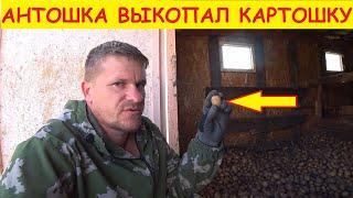 Деревенские будни / Выкопал картошку