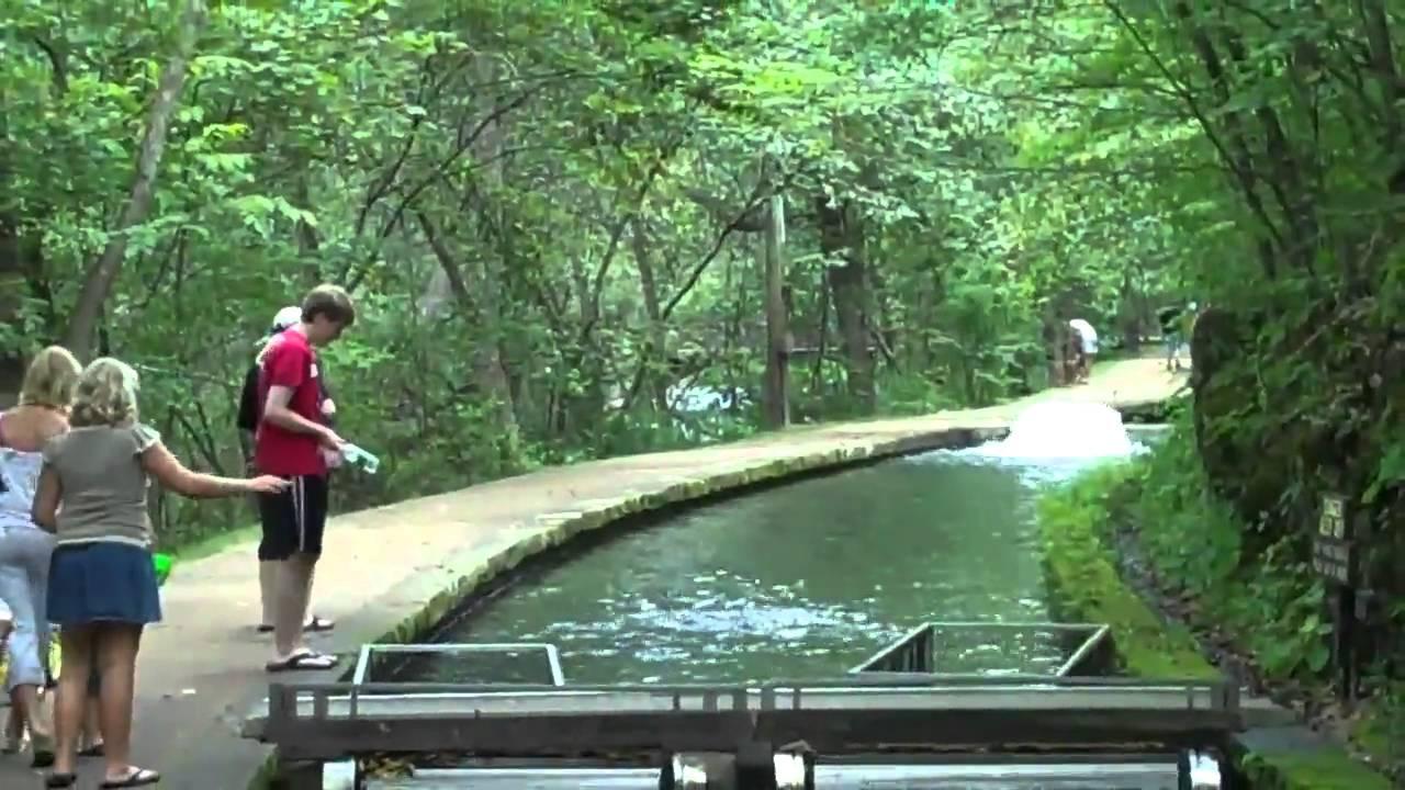 Meramec springs trout hatchery 8 17 10 youtube for Fish farm missouri