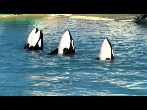 rencontre avec les dauphins marineland espagne