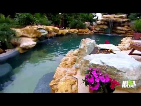 Insane Pools Brings the Caribbean to This Family's Backyard