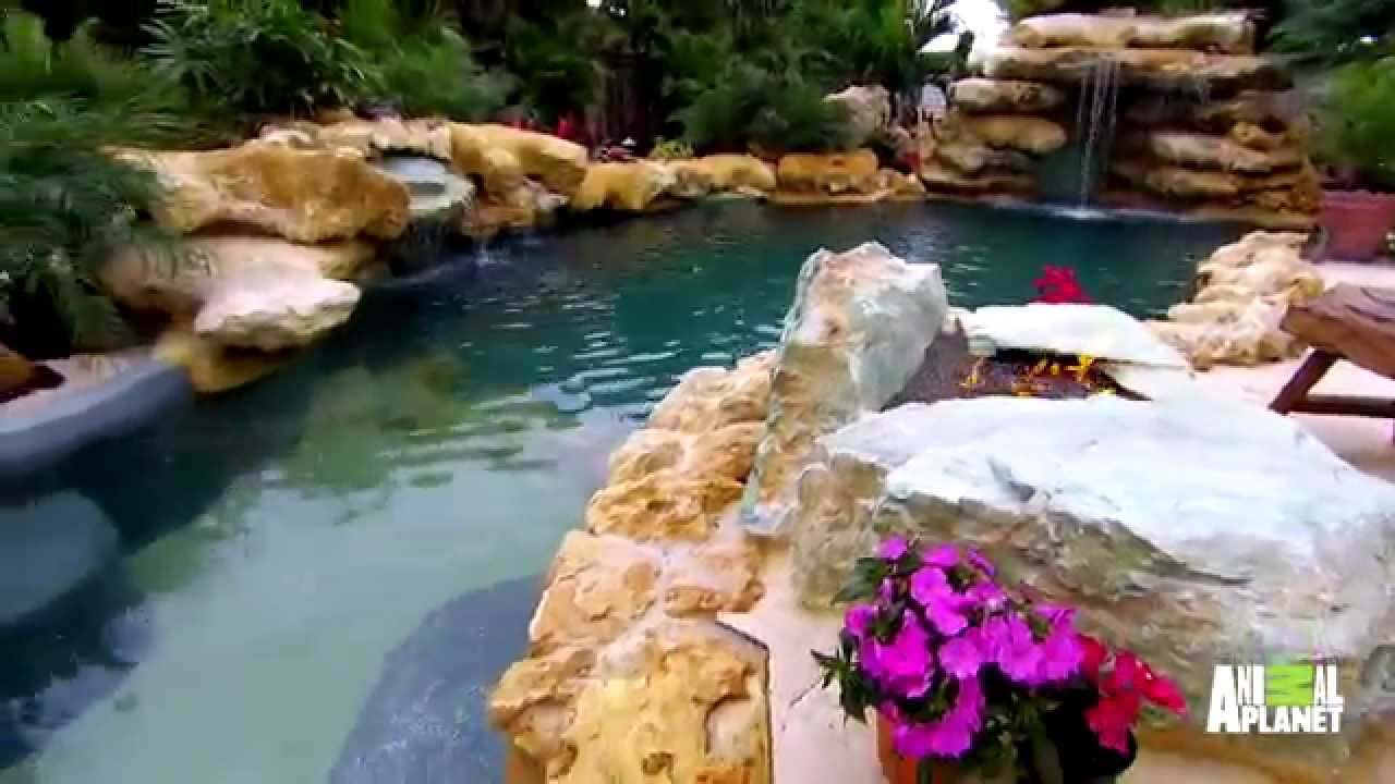 Insane pools brings the caribbean to this family 39 s back for Pool show on animal planet