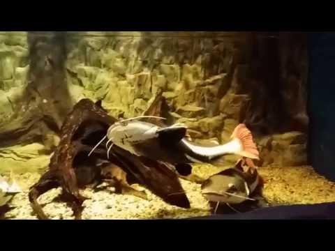 Oceanarium Świnoujście.