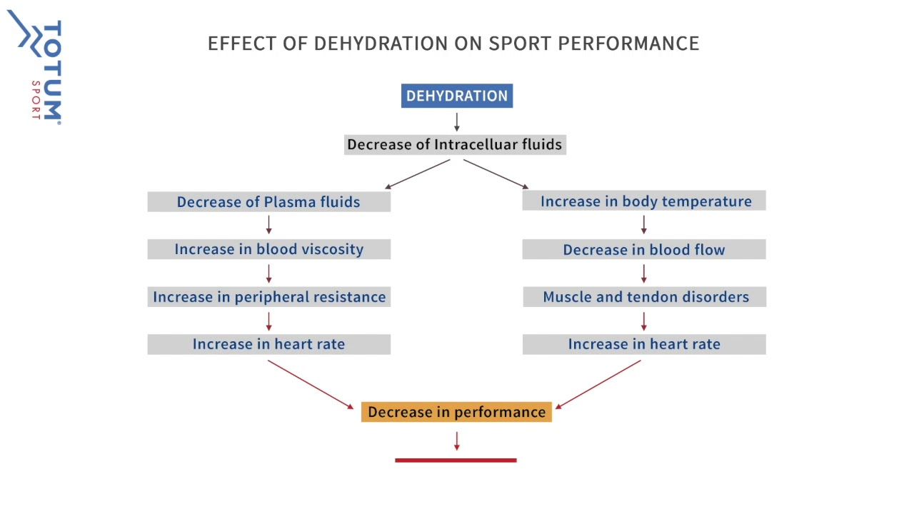 The Effects of Dehydration on Performance - Totum Sport