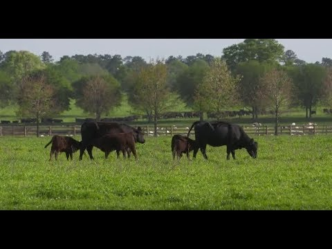 Is Grass-Given Beef Better