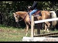 watch he video of Looker on obstacles.  Silver Palomino KNGHA Gelding