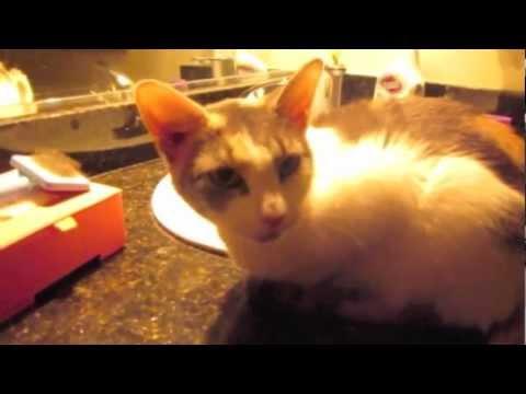 Saving NY cats Storm and Tina after Hurricane Sandy