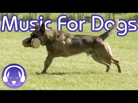 music-to-help-your-dog-sleep:-deep-relaxation-music-(tested)-(15-hours)
