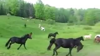 Нет ничего лучше, чем видеть красивые лошади бегут бесплатно!(https://vk.com/id124214543 Альберт Алдай., 2017-01-23T02:15:49.000Z)