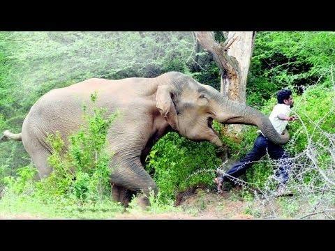 ELEPHANT ATTACK IN KERALA - YouTube  Kerala Elephant Attack Youtube