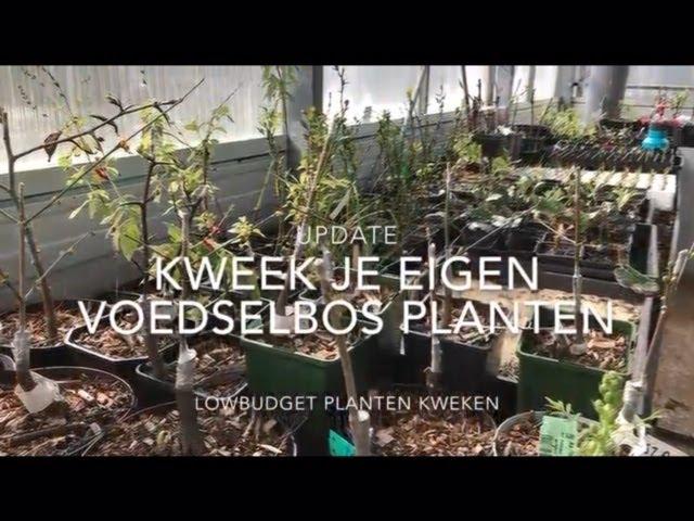 Voedselbos planten kweken