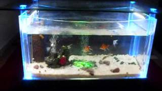Coffee Table Aquarium.wmv